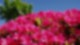 Antenne MV 100 Dinge Rhododendronpark